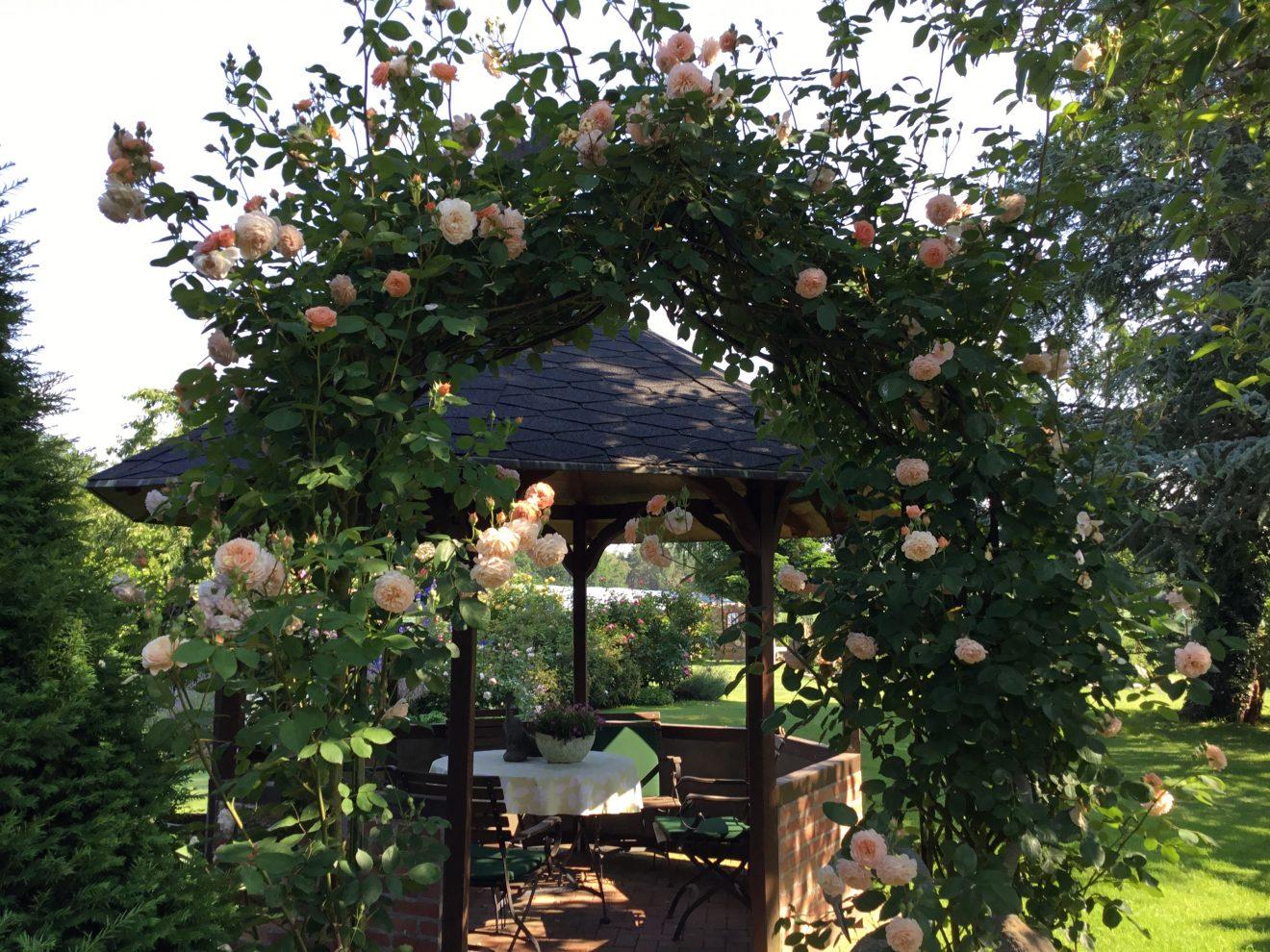 Leander am Rosenbogen